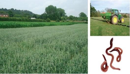 Figura 6.- Pruebas del producto OMF a escala de granja han demostrado su eficacia en un sistema común de producción de cultivos sin daños al ecosistema