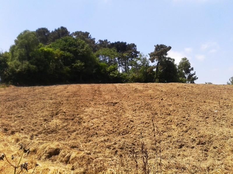 Foto de la preparación del terreno antes del establecimiento del cultivo en COGERSA (28/06/2013)